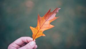 Herbstschmerz II
