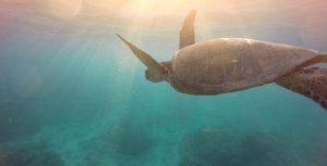 unterwassermensch