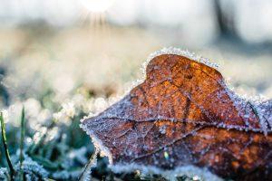 Frostwehe